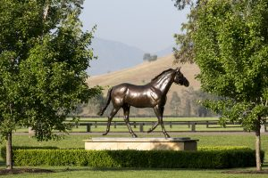 Hunter Valley Horse Stud Coolmore